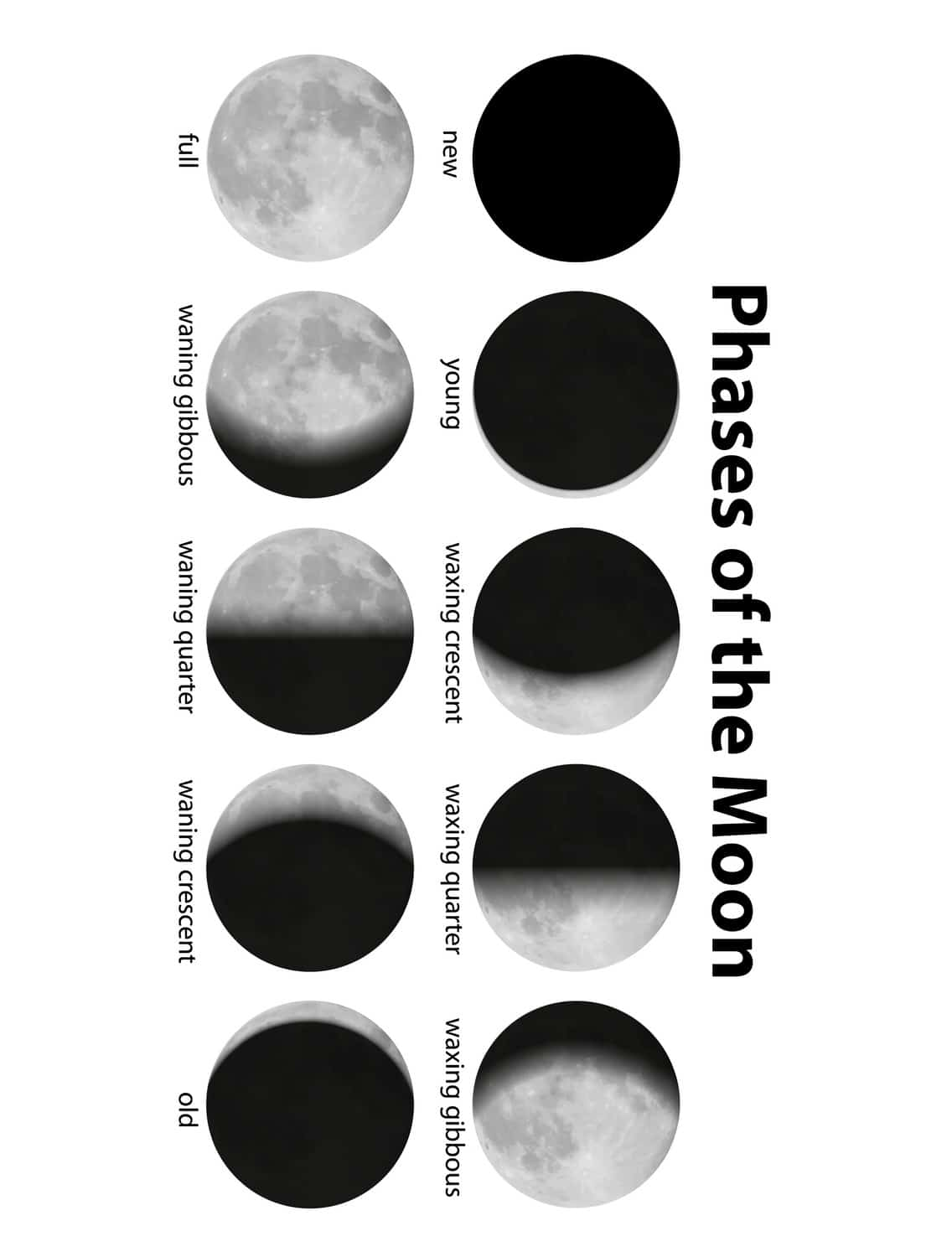 Search Results For Printable Moon Phases Template Worksheet Calendar