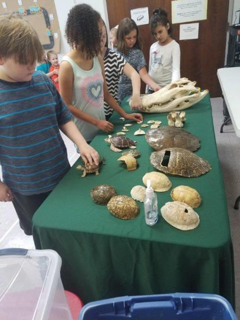 Kids examine reptile specimens