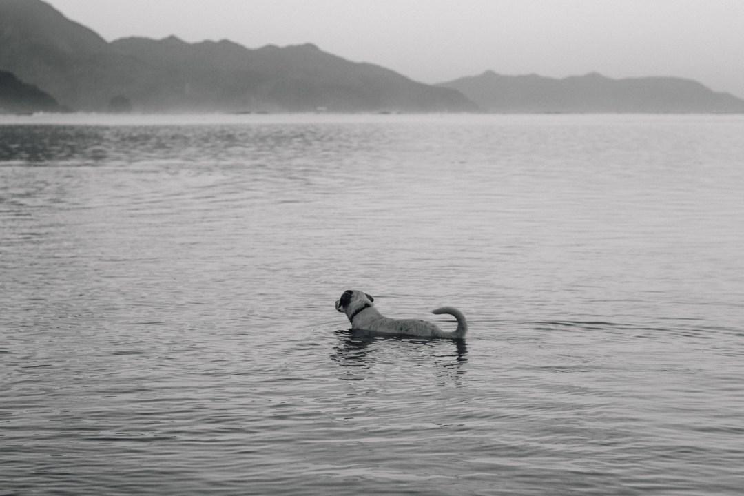 Puppy swimmer