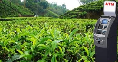चाय बागानों में लगाए जाएंगे 1000 नए एटीएम