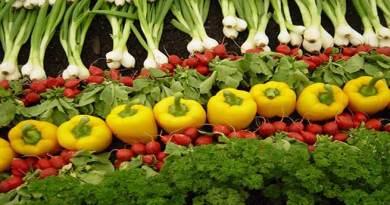 सिक्किम के किसानो का कमाल, 80,000 टन जैविक सब्जियों का किया उत्पादन
