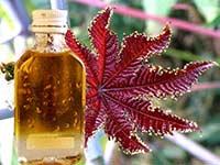 Как применять косторовое масло против морщин на лице