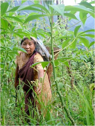 Kong Bibiana grows millet along with numerous other vegetables in her jhum field.