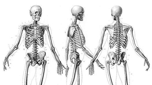Рисувателно ателие: Кости в човешкото тяло 2