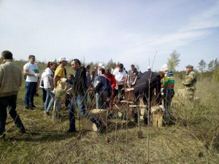 Тольяттинские власти препятствуют посадке леса?