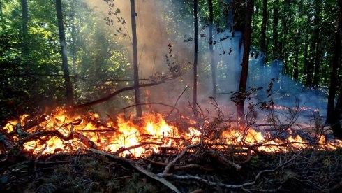 В Думе Тольятти обсудили причины возгораний