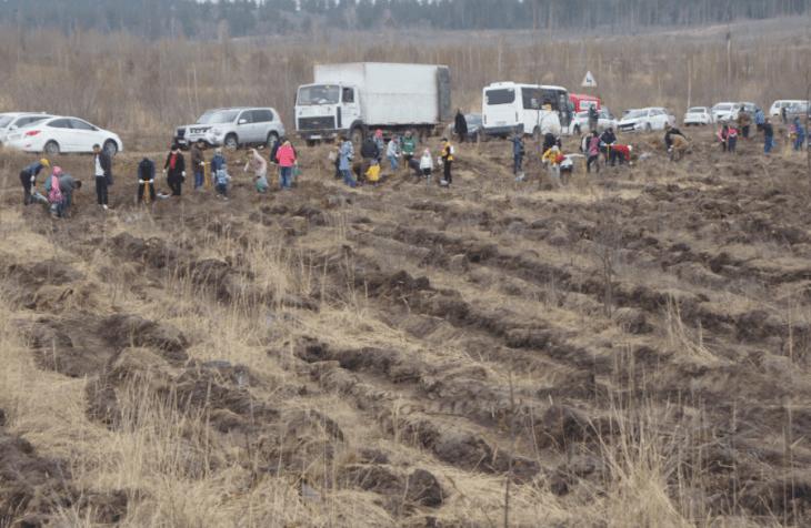 «Это наше общее дело»: в Тольятти прошла традиционная акция по посадке леса