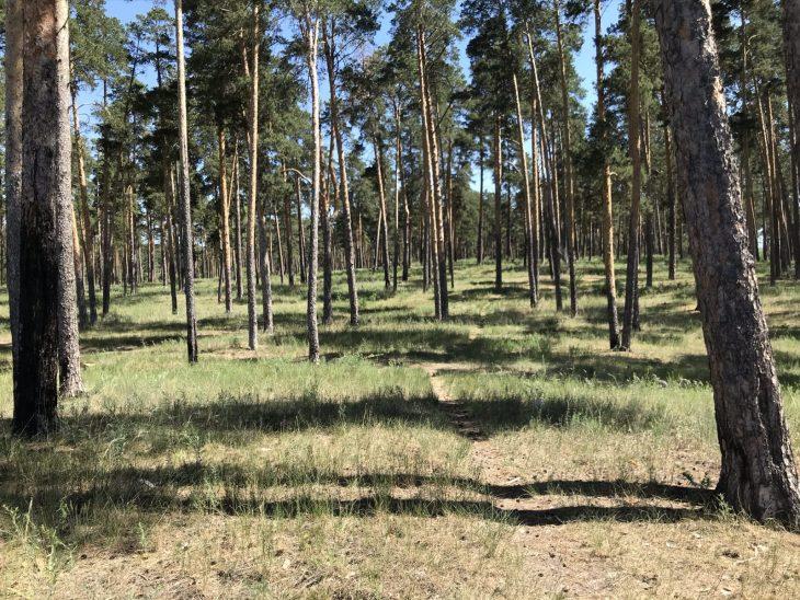 Причины сокращения финансирования комфортной городской среды в Тольятти остаются не раскрытыми