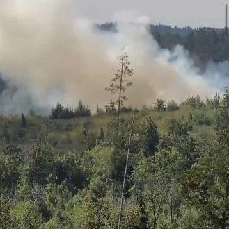 В Тольятти на площади 6 га горит лес