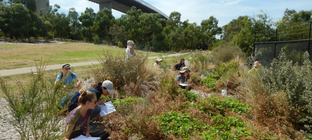 Using citizen science to observe plant-insect interactions in the city