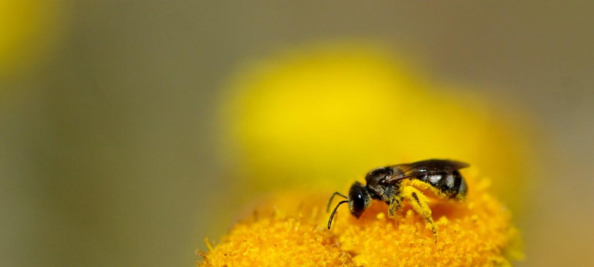 Springtime pollinator observatories