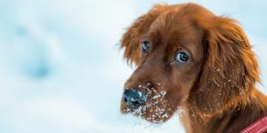 Dyreforsikring Hund & katt