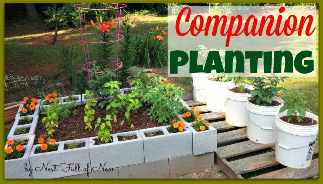 Companion Planting - Nest Full of New