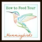 How to Feed Your Hummingbirds