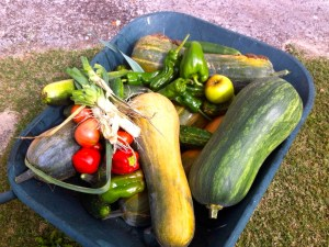 This is my dad's bounty of one day. And it all tastes like it should.
