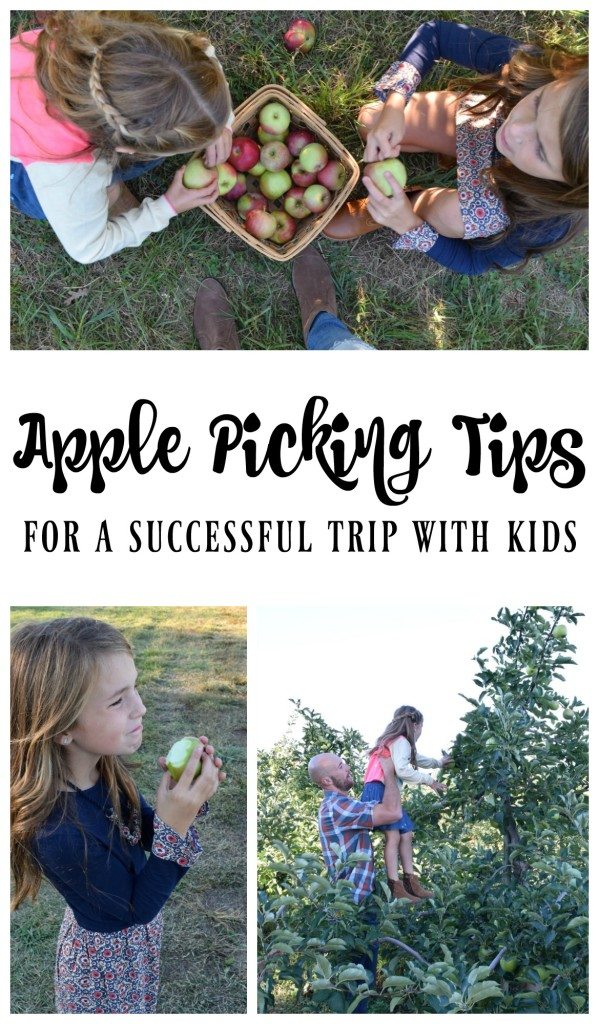 Apple picking Tips for a Fun Fall Activity with Kids