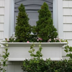 Window Boxes and Curb Appeal