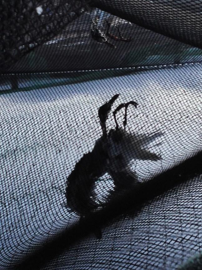 23:31 Dead bird at Fish Farm net