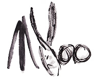 "Abstract Artist - Nestor Toro - Artist Nestor Toro's Stylized Signature - A distinctive ""Bull"" - Toro is Bull in Spanish!"