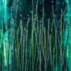 SOLD / Vernal Garden (With Green and Silver) (2021) Canvas 3 - Triptych / Artist - Nestor Toro