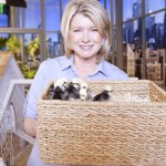 Martha Stewart's advice on keeping backyard chickens