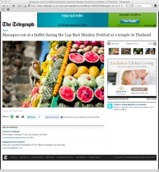 **TEARSHEET FROM THE TELEGRAPH WEBSITE** A monkey sits on a pyramid made of fruit during the annual 'monkey buffet festival' at the Phra Prang Sam Yod (The Three Crests Phra Prang) in Lopburi province. The festival is held annually on the last Sunday of November to promote tourism.