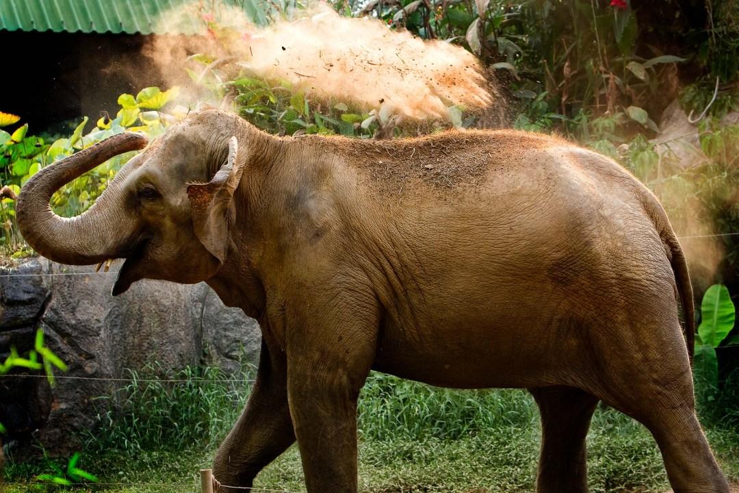 Elephant | Dusit Zoo Bangkok