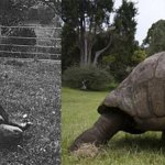 Jonathan, la plus vieille tortue du monde a 182 ans