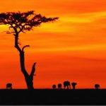 Y a-t-il une malédiction africaine ?