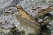 Mexique: La population jette un violeur présumé aux crocodiles