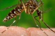 Maladie À Virus Zika: Les conseils du ministère burkinabè de la santé