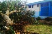 Chr de Daloa: Un manguier s'abat sur le père d'un enfant malade et le tue