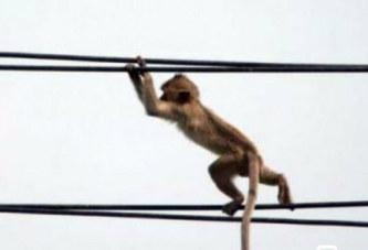 Kenya: Un singe provoque une panne de courant nationale