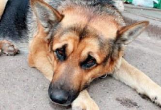 Nigeria: Une famille nourrit son chien avec un nouveau né