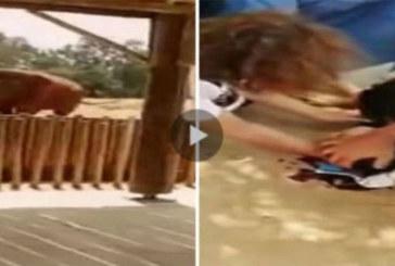 Vidéo – Maroc –  Drame impensable au zoo: une fillette perd la vie