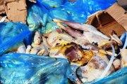 Gare STAF de Léo:   Près de 200 carcasses de poulet saisies
