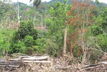 Côte d'Ivoire : la forêt classée en voie de disparition en un demi-siècle