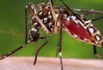 Santé : dispositions à prendre face à la flambée de « dengue » au Burkina Faso