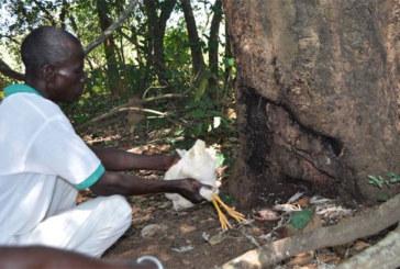 Côte d'Ivoie/ Crime rituel : Une dame et une fillette retrouvées mortes la gorge tranchée à Mbékouadiokro