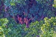 Un photographe survole par hasard une tribu isolée