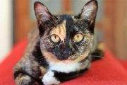 Une chatte enfermée dans une cave survit 33 jours en buvant du vin