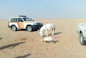 Un cheikh saoudien tué par l'âne qu'il tentait de sodomiser