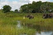 Vidéo: Un éléphant mordu à la trompe par un crocodile