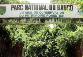 Côte d'Ivoire – Un religieux affirme : « Nous avons capté 7 millions de génies dans la forêt du Banco »