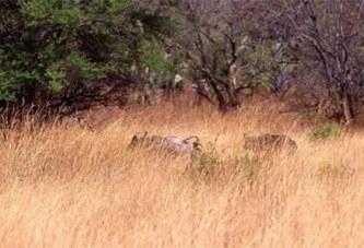Côte d'Ivoire: Le prenant pour une gazelle, un chasseur abat un homme