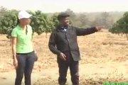 Agriculture: Guillaume Soro sur les traces de Bédié et Houphouet Boigny