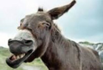 Un âne «condamné» à payer 3 millions FCFA
