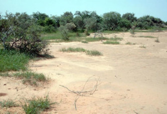 Burkina Faso: quatres gendarmes tués dans une embuscade au nord du pays