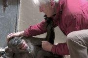 L'adieu émouvant d'un chimpanzé à son vieil ami