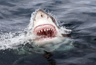Cuba – Attaque de requin: le bain nocturne tourne au drame  Facebook